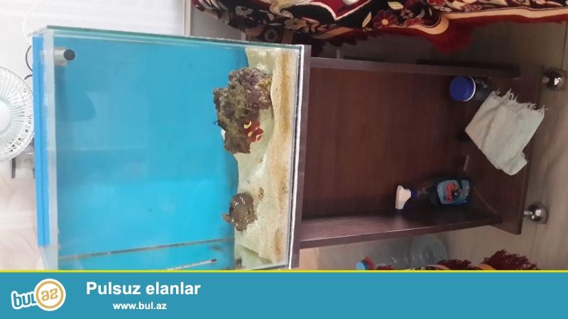 Hazır okean akvariumu və 1 ədəd kloun stripe balığı...