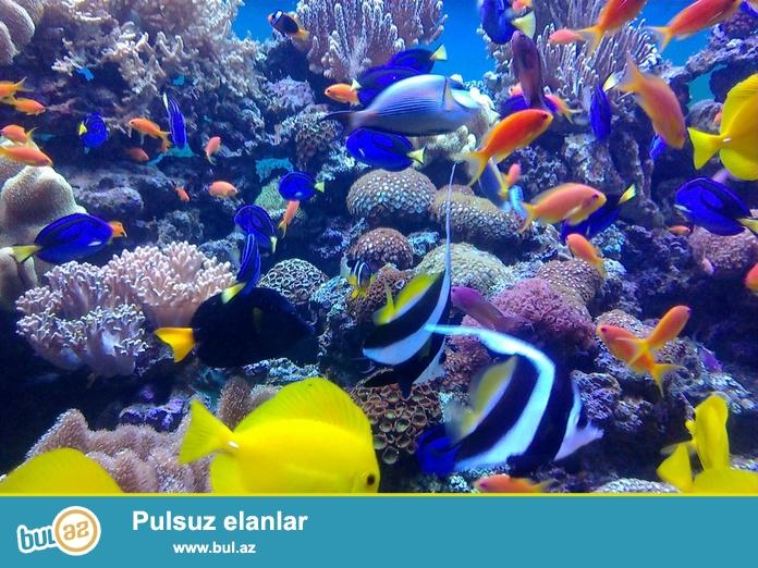 Sifarisle istenilen olcude sirin su ve deniz akvariumlarin hazirlanmasi, sirin su ve deniz baliqlarin canlilarin satisi...
