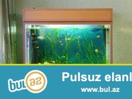 butun nov akvariumlarin ve baliqlarin sifarishi qebul olunur...