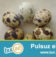 bilircin ve yumurtasin satiram qiymet razilasmaqda olar
