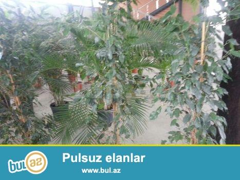 BIzde her novde bitkiler var...Qiymetler ise cox munasibdi...