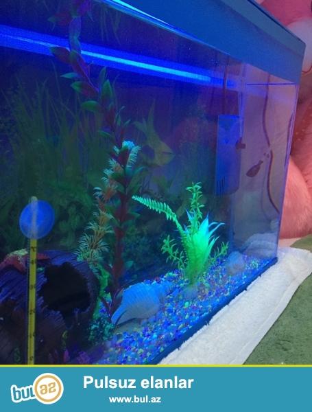 Hazir akvarium uzunluqu 60sm hundurluk 38sm eni 25 iwiqida var ozunun...