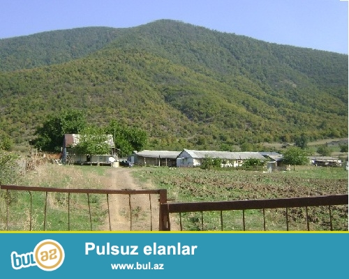 Oğuz  rayonu  ilə Calud  kəndi  arasında   6 hektar  ərazisi  olan  ferma  satılır...