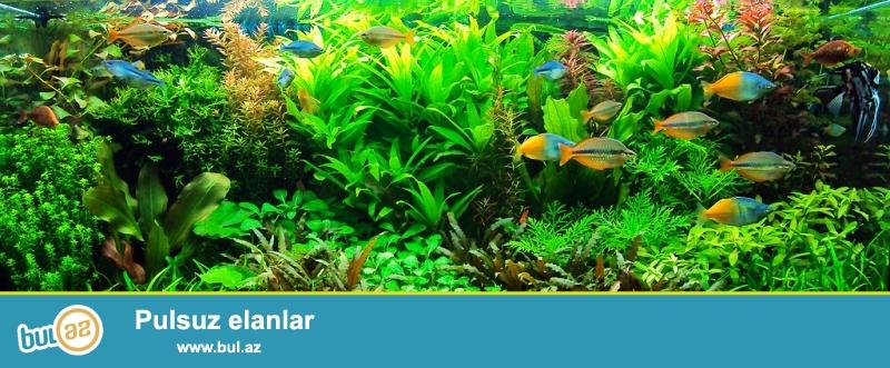 Akvarium bitkileri, Valisneriya, bakopa, kriptokorina, ludvigiya, Rotala ve s.
