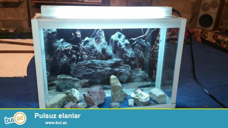 Her nov akvariumlarin zovqunuze uygun hazirlanmasi  Yeməli balıqların satışı üçün akvariumlarin hazirlanmasi akvariumlarin temizlenmesi  aksesuarlar 070 808 18 03 Whatsapp sifaris qebul olur