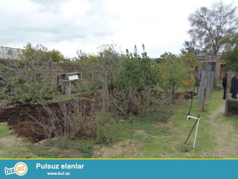 Novxanı bağlar massivi 10 sot 2 otaq, tövlə var, 8 ton çən, avtomatlaşdırilmış su sistemi, 12 daş hasar, meyvə ağacları, qaz-su-işıq, su quyusu, marşrut yolundan 50-60 m məsafədə, kupçalı