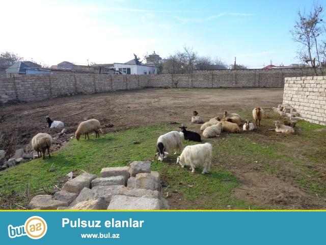 Sabunçu rayonu, Zabrat 2 qəsəbəsi, Gros marketin arxasında 12 sot torpaq sahəsi təcili satılır...