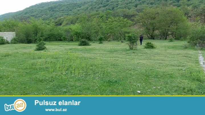 Quba rayonu Kupcal kendinde her bir seraiti olan 12 sot torpaq sahesi satilir...
