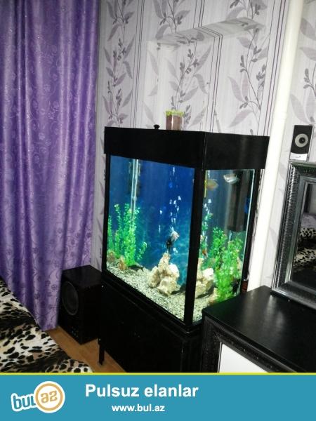 Akvarium satiram 256litirlik 80x80x40. 10mm susenin qalinligi...