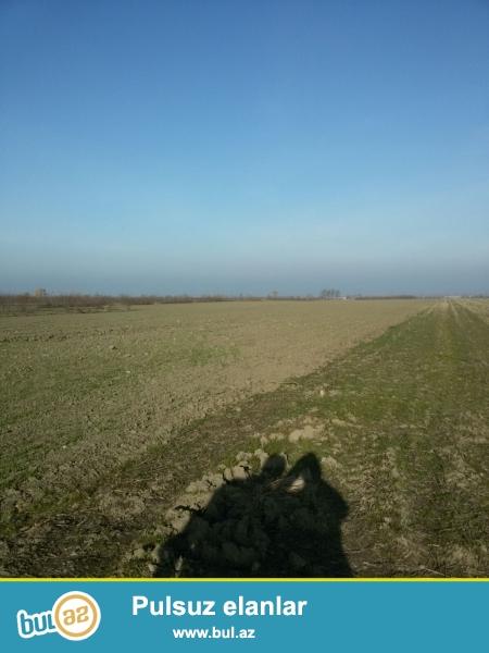 Xacmaz rayonu alekseyevka kendinde 3 hektar bow torpaq sahesi satilir qiymet 20000...