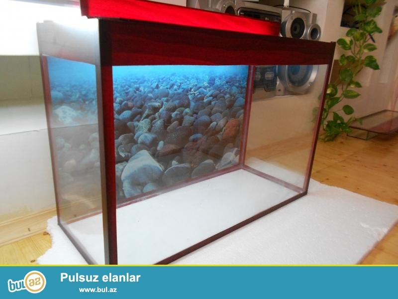 akvarium wekildeki qiymetler yendii