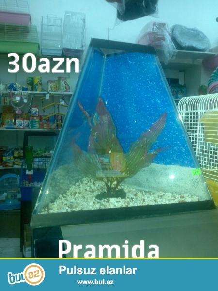 bu akvariumlar satilir.magaza qiymetinden 50% ucuz...