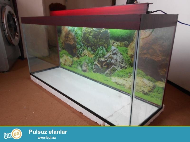 akvarium  qapaqli arxa fon wekili var <br /> bawqalarida var baliqlarida var