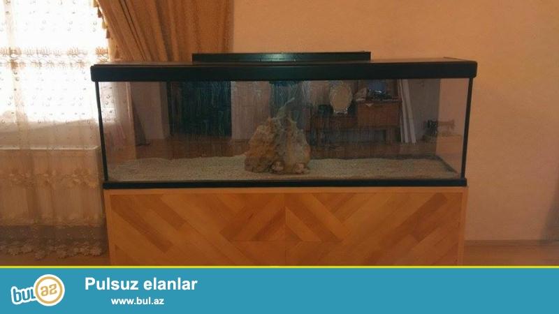 Salam akvariyum satilir hec iwlenmeyib ela vezyetde  uzunlugu 2 metir,su tutumu  500 Lt  icinde temiz bahali qum var...