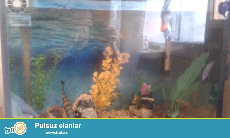 Akvarium butun aksesuarlariyla ve icinde 10 eded baliqla bir yerde satiram oz qiymetinden awaqiya