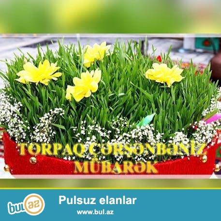 Salam Yenı suraxanıda Tecılı Senedlı 4Sot torpaq sahesı satılır 1 sotu 3500 AZN ısteyen sexsler buyurub baxabılerler