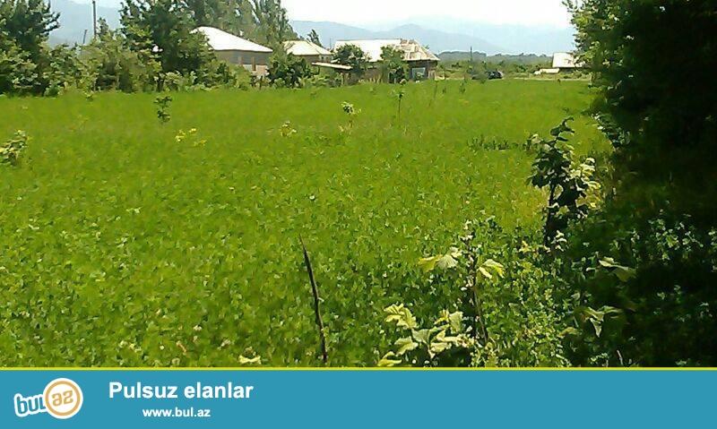 tecili TORPAQLAR SATILIR SAMAXI-ISMAYILLI-AGSU-QEBELE- zonalarinda- hektarlarla- qiymet-1 hektari- 1500 aznden-055 7929119 -070 7918417