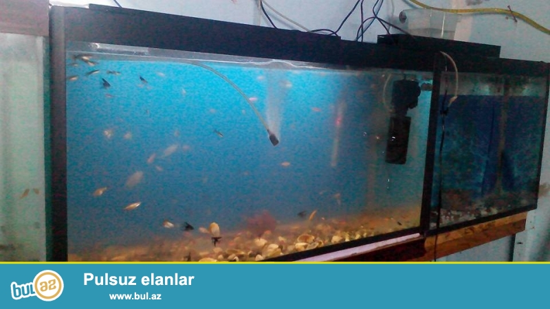 akvarium iwlenmiw 160 litre  <br /> uzunu 97 sm <br /> hundurluyu 54sm <br /> eni 34sm <br /> real alicilar zeng etsin