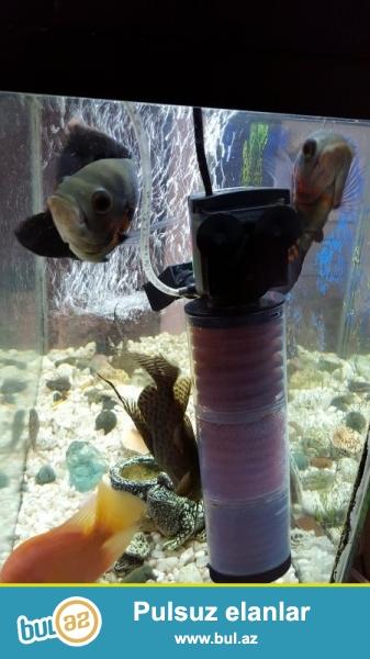 Akvariumun ölçüləri uzunluq 85 sm, en 30 sm, hündürlük 60 sm. Akvarium tam komplektləri ilə təchiz edilib...