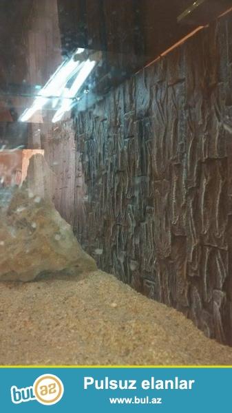 Akvariyum satilir hec iwlenmeyib ela vezyetde uzunlugu 2 metir,su tutumu 500 Lt icinde temiz bahali qum var...