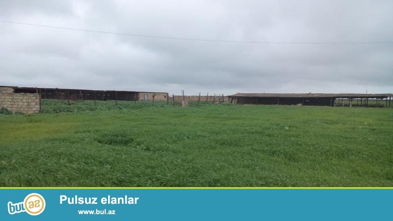Neftçala rayon ərazisində, 15 hektar torpaq, kanalla əhatəyə alınmış, şirin su kanalı əraziyə bitişikdir...