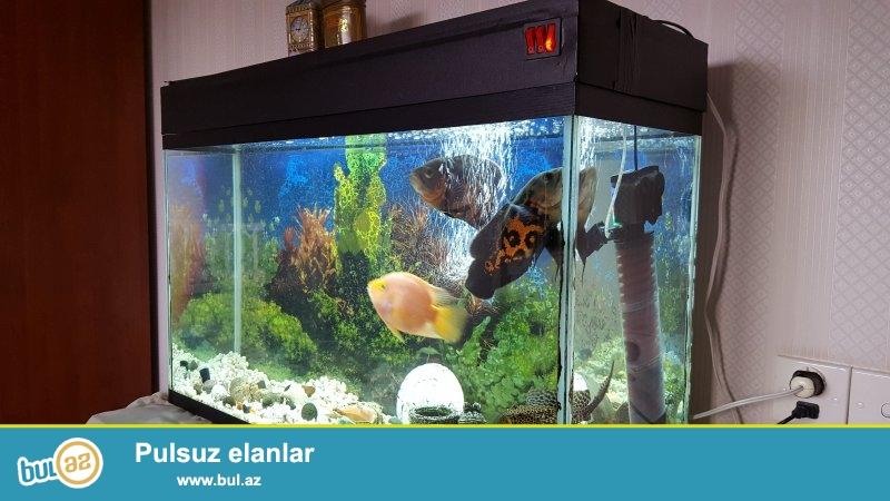 Akvariumun ölçüləri uzunluq 85 sm, en 30 sm, hündürlük 60 sm...