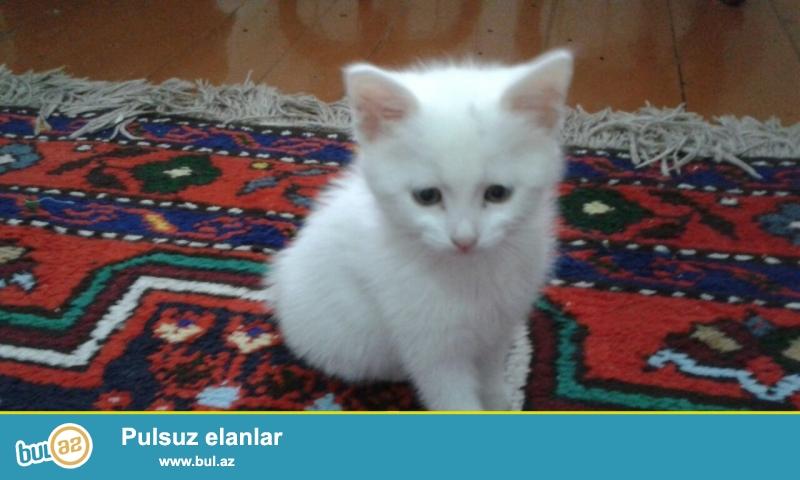 Turk Anqoru.qablari,yemekleri,torpaghiyla birge satilir