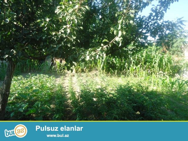 Sabunçu rayonu Zabrat 2 qəsəbəsi, Dəmiryol stansiyasına yaxın ərazidə, 3 sot torpaq sahəsi satılır...