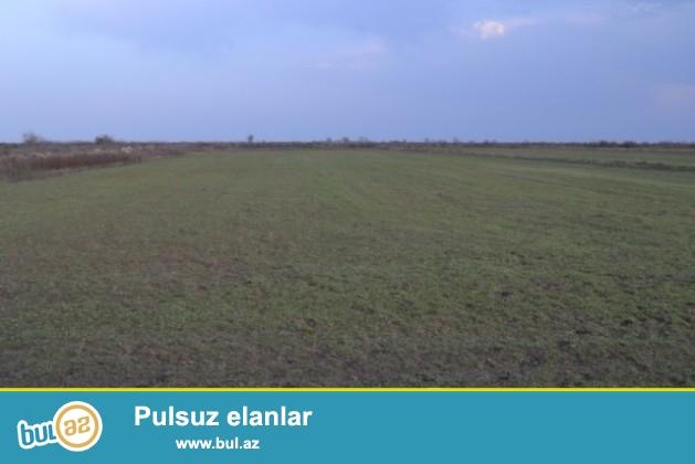 Kürdəmir rayonunda ferma satılır. 200 hektar torpaq sahəsi...