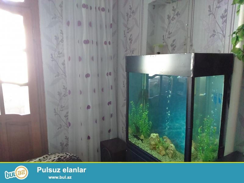 Akvarium satiram 256 litirlik akvariumin olculeri 80X80X40 sm...