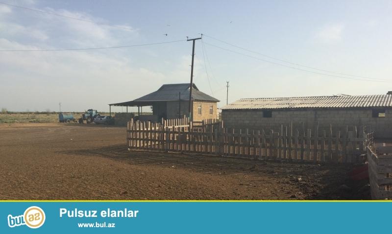 İmişlinin Ağaməmmədli kəndində,trasdan 3 km aralı, sahəsi 210 ha hazır ferma...