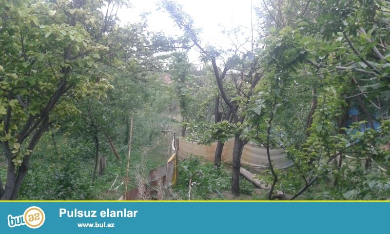 Naxcivan Şəhərində mərkəzdə qonaqlar evi tərəfdə 8 sotun icinde Həyət evi satilir...