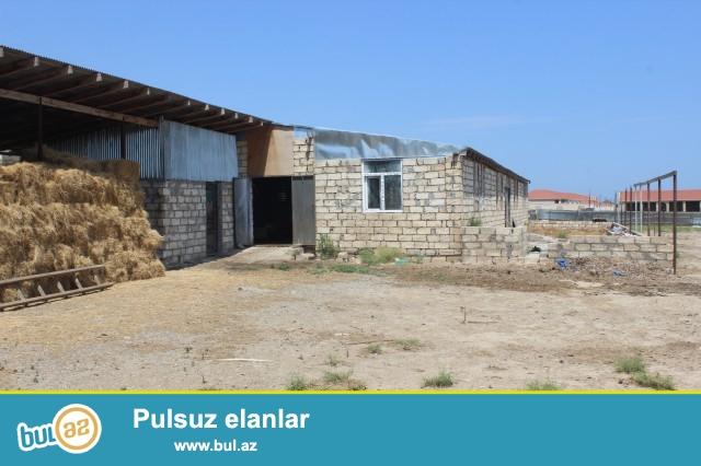 Abşeron rayon Məhəmmədi qəsəbəsi, əsas yoldan 1500 metr məsafədə, 71 sot torpaq sahəsində, ümumi sahəsi 500 kvadrat olan ferma satılır...