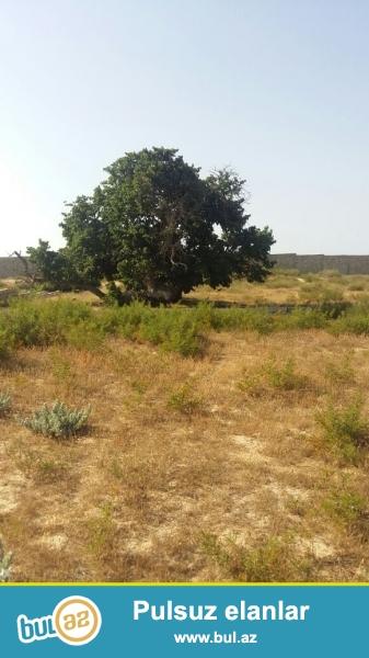 Sabunçu rayonu, Nardaran bağlar massivi, dənizə yaxın ərazidə, 4 tərəfi hasarlanmış 5 sot torpaq sahəsi təcili olaraq satılır...