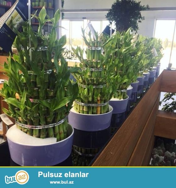 her nov bitkiler xaricden getirlir ucuz qiymete