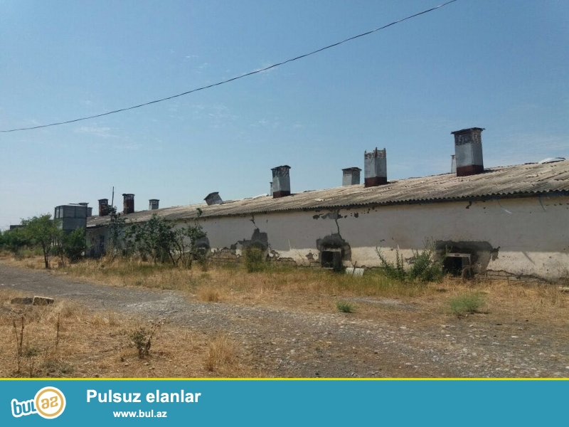 Göyçay şəhərində avtovağzaldan 800 metr məsafədə Quşculuq fabriki satılır və uzun müddətli kirayə verilir...