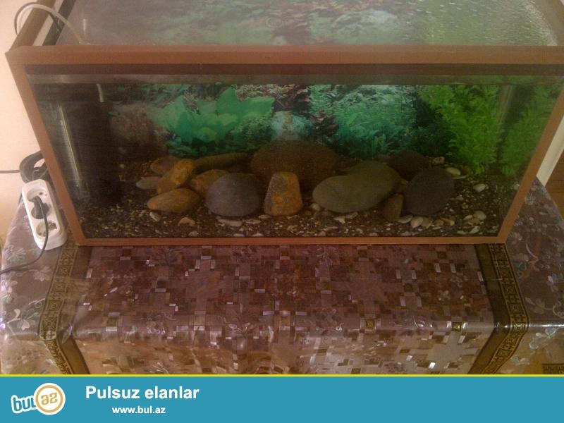 Akvarium, her bir avadanliqi var ( filter, su qizdirici, dekarativ daslar, arxa fon sekili, qapaqi ve 1 eded baliq var) susenin qalinliqi 8 mm...