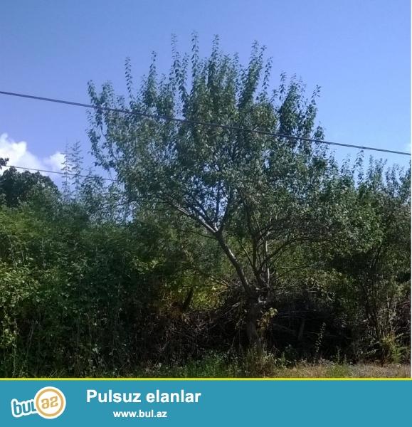 İsmayıllı rayonu Diyallı kəndində 4 sot həyətyanı torpaq sahəsi satılır...