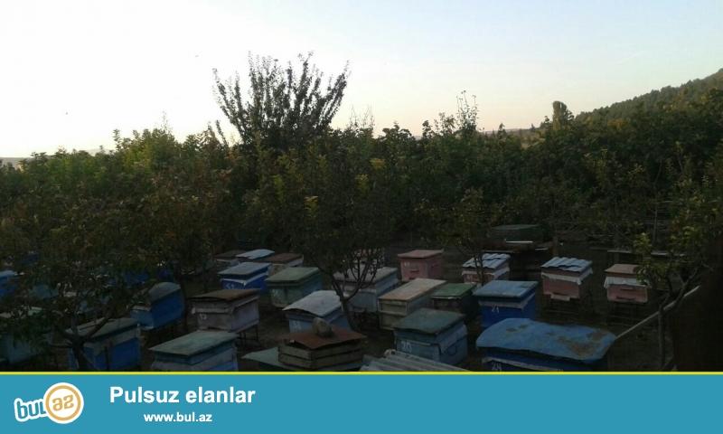 Əssələmu aleykum bacılar.\r\nTəmiz Gürcüstan balı - 1 kq -- 25 azn