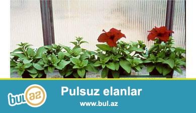 soxulcan gubresi  5 kq = 2.5 azn .  butun  nov  ekinlerde  balkon  gullerinde istixanalarda  istifade  ede  bilersiz.