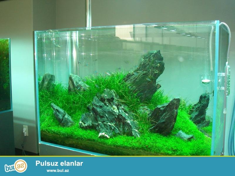 2 m ve ya az 2 metirden boyuk olan akvariumlar sade vidde 200azn