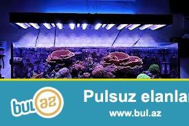 butun nov akvarium sifarishleri temiri ve servisi  isdenilen olcude isdenilen formada...