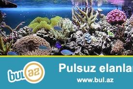 butun nov akvarium sifarishleri temiri ve servisi  isdenilen olcude isdenilen formada.<br /> 2metir ve yaz az boyuk olan akvariumlar sade vidde 200 azn yalniz bizde