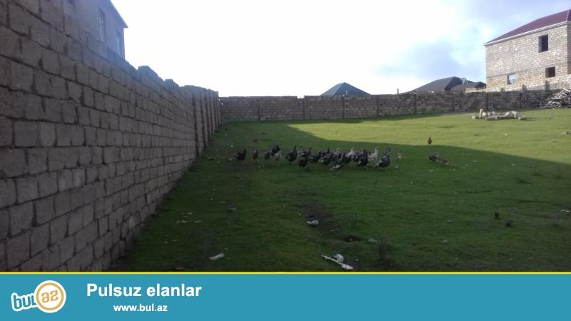 Tecili olaraq Qobu qesebesi yolunda ana yoldan 100 metr arali qazi suyu iwigi kanalizasiya sistemi olan 12 sot hasara alinmiw torpaq senetle satilir ...