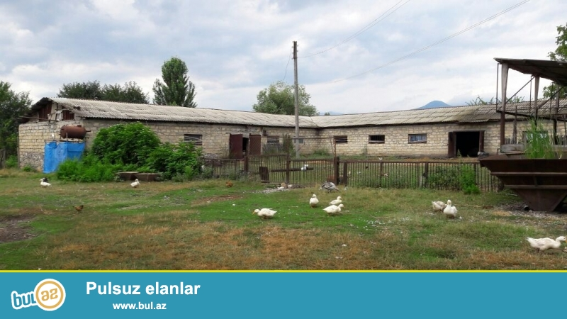 İsmayıllı rayonunda çay qıragında 80 sot torpaq sahəsi olan ferma təsərrüfatı satılır...