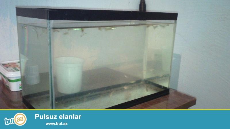 Salam. <br /> Satılır: quppi balaları və malyokları(30ədəd+)+8 litrlik akvarium, hamsı biryerdə-15 azn...