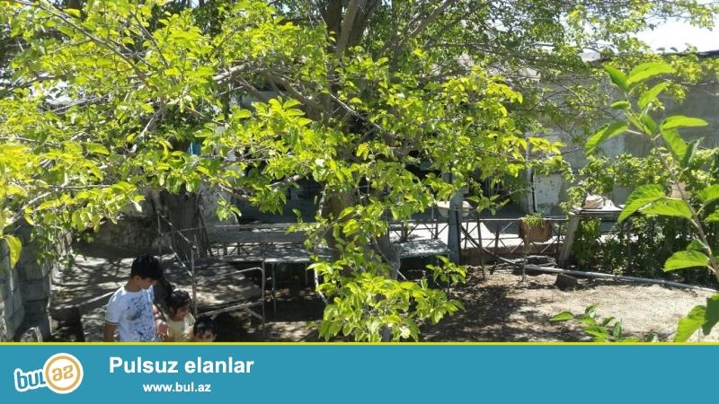 Torpaq daş hasarla hörülmüşdür, 30 sotdur. Bağda işıq, 2 su hovuzu var 3 cu hovuzda yari tikilidi, 1 su quyusu, 1 su çəni , hamam ( su qızdırıcı) və tualet,  2 otaq var sahesi 36 kv metrdir , üzümlük,200 – den cox müxtəlif meyvə ağacları var...