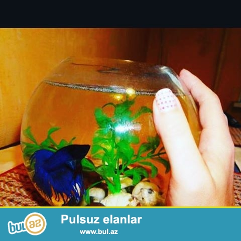 bir uc bes litrlik akvarium satisi