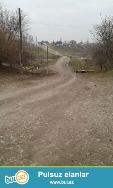 Xacmaz rayonu Qalagan kendi 14 hektar torpaq sahesi satilir.300 findiq agaci ekilib icinde agaclar 1 ilin agaclaridi...