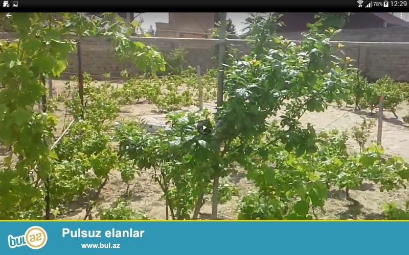 Mərdəkan qəsəbəsində, dəniz yolunun üstündə, Məryəm market ilə Sahil marketin arasında 2 həyətdən ibarət olan bağ satılır...